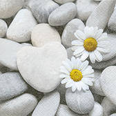 Daisies on stones