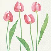 Watercolour tulips